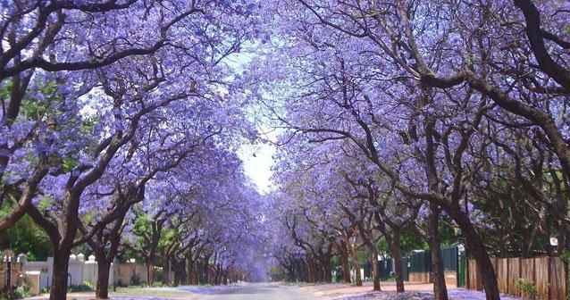 Pretoria y Tshwane