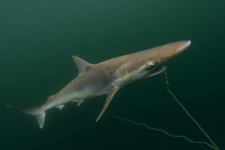 Protección a tiburones