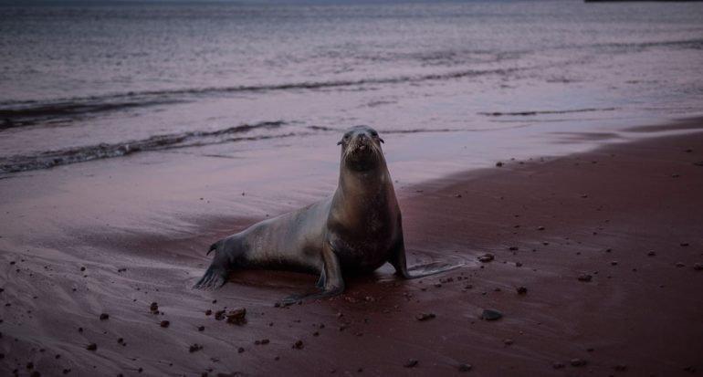 Quinto día en las Islas Galápagos
