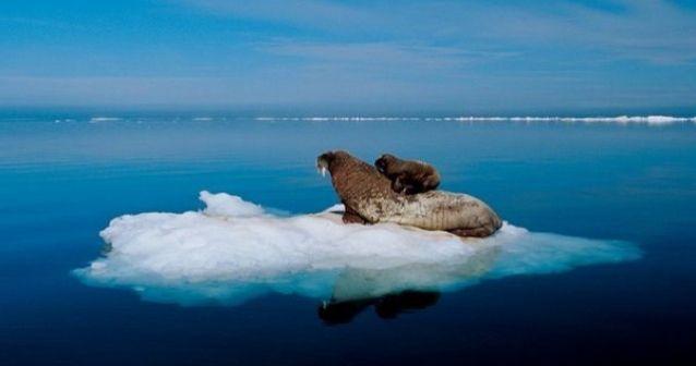 Récord en el Ártico