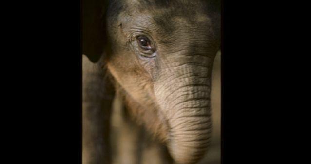 Refugio para elefantes