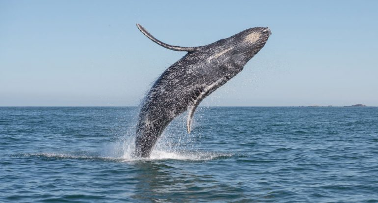 Las ballenas en México