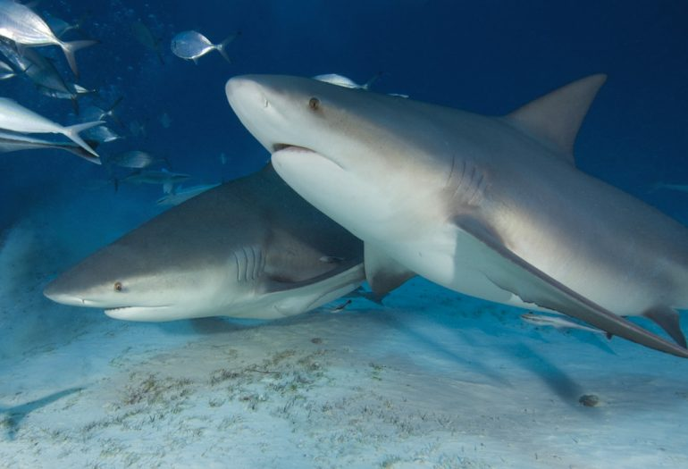Repelente de tiburones