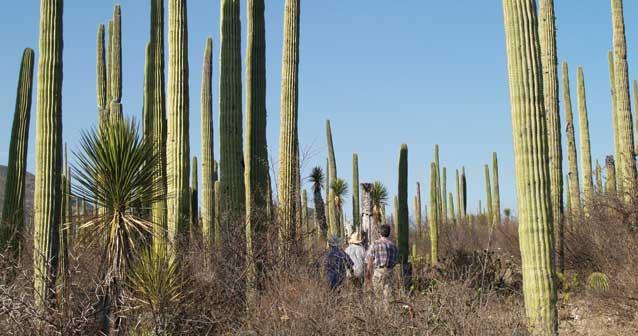 Reservas de la Biósfera de México