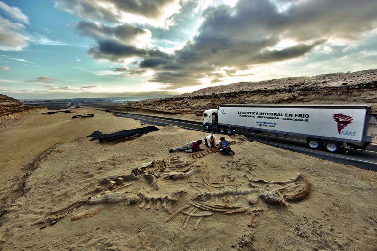 Resuelven misterio de varamiento masivo de ballenas