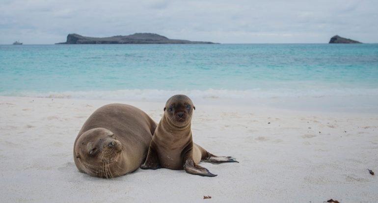 Séptimo día en las Islas Galápagos