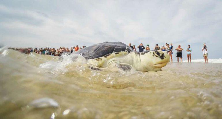 Salvar a las tortugas: fotografías del rescate de las tortugas marinas