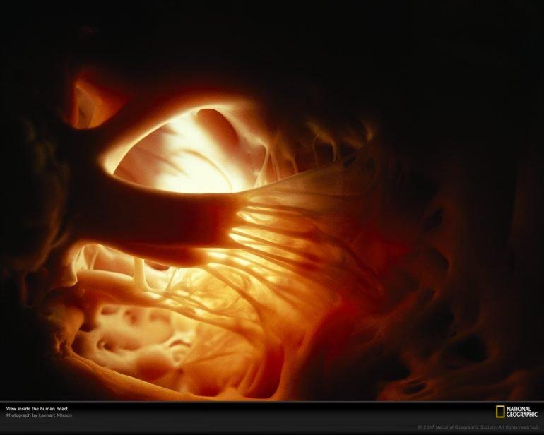 Se regenera tejido celular de corazón