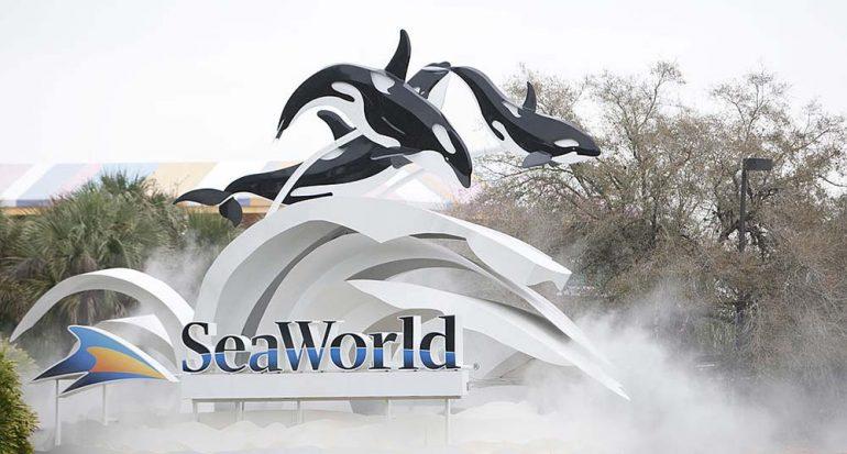 SeaWorld terminará sus espectáculos de orcas en 2019