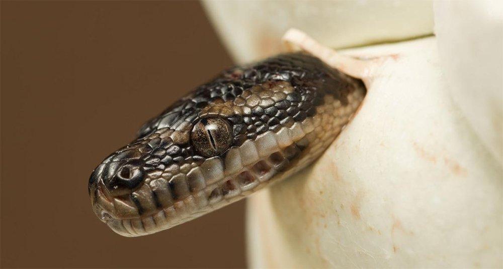 Te Sorprenderá La Forma De Nacer De Estos Animales National Geographic En Español