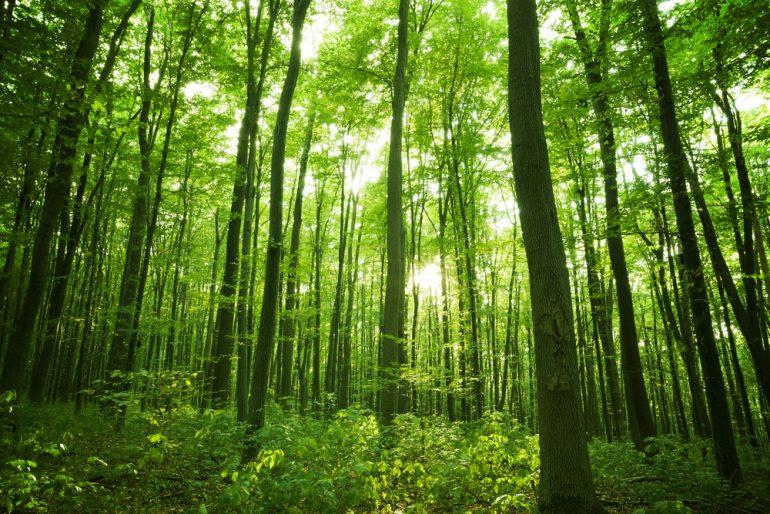 Tecnología en favor de los bosques