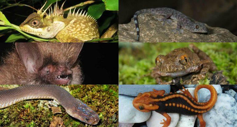 Tesoros del Gran Mekong: 6 especies nuevas para la ciencia