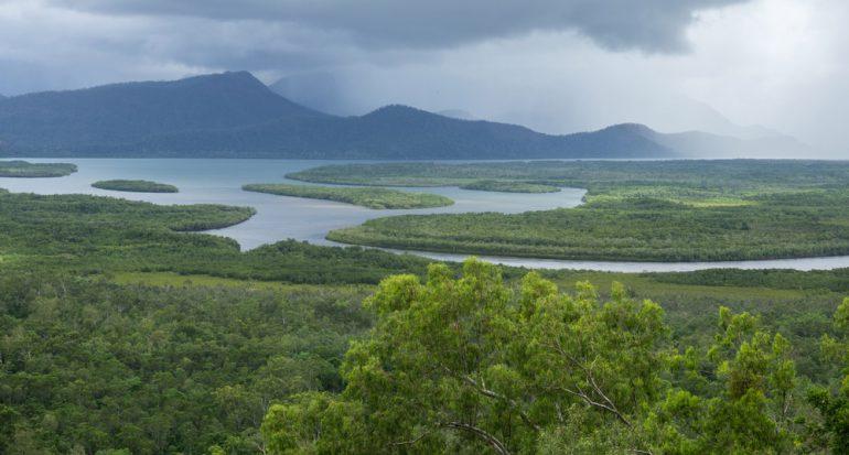 Toma un paseo por la selva de Australia