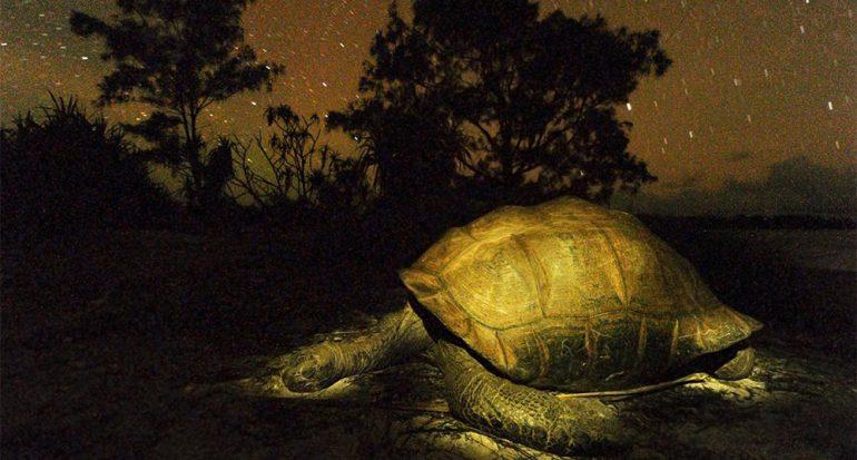 Tortugas cavernarias gigantes dan una enorme sorpresa