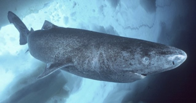 Trajes de piel de tiburón
