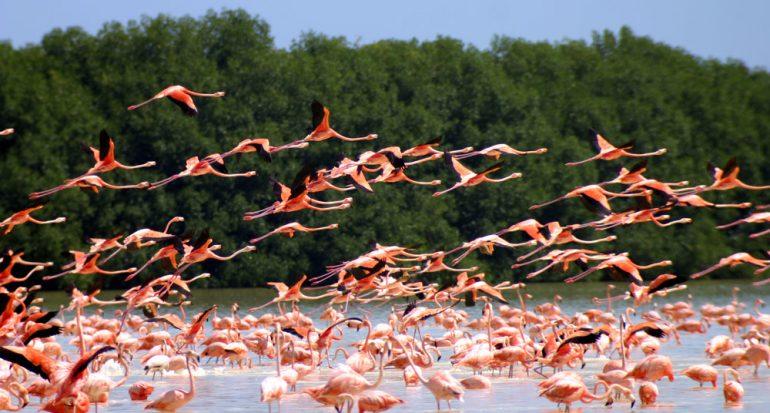 Tras el reino de los flamencos rosados