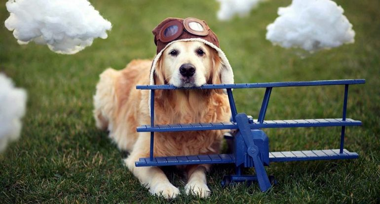 Tu mascota ya puede ser un viajero frecuente y tener descuentos