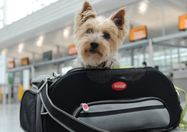 Tu perro en el avión