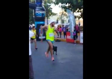 Un corredor da una brutal patada a un perro callejero