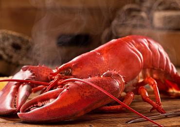 Un país prohíbe por primera vez cocinar las langostas vivas