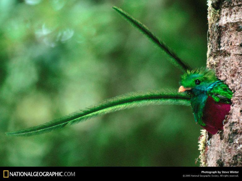 Un quetzal llega al mundo