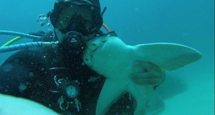 Un tiburón y un buzo son grandes amigos