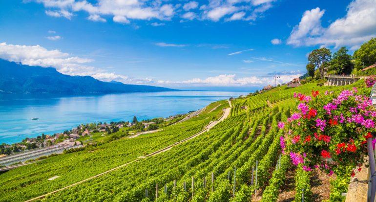 Un viñedo junto al lago