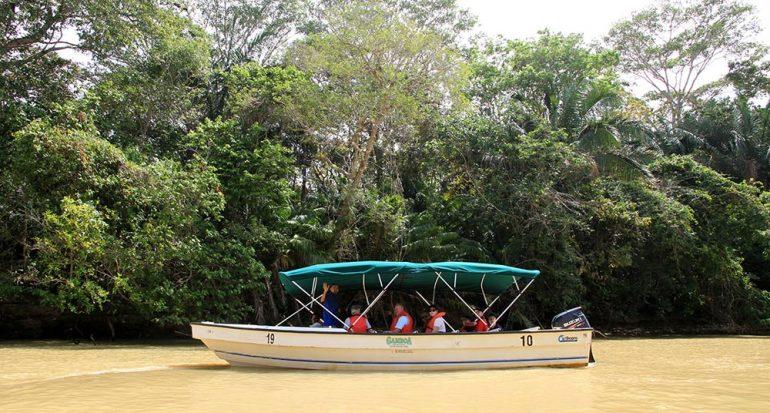 Un viaje a la selva tropical de Panamá