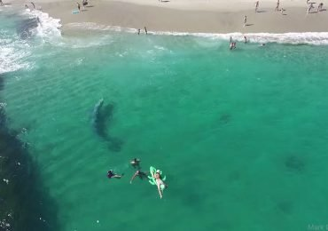 Una ballena gris fue captada cerca de la playa en California