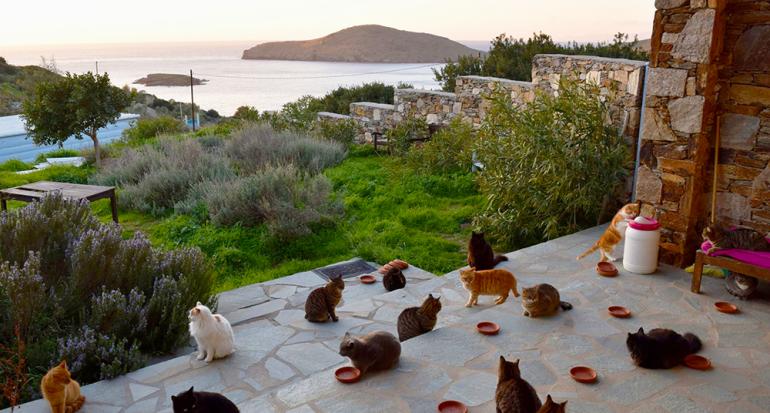 Una organización te paga por cuidar gatos en una isla en Grecia