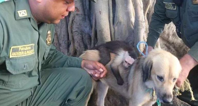 Una perra adopta a un mono abandonado recién nacido