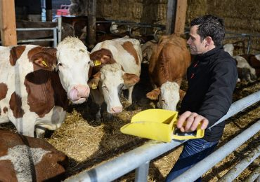 Vacas por internet