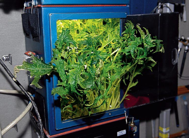 Verduras extraterrestres
