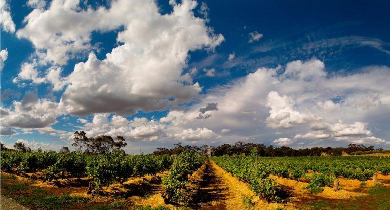 Galería | Los vinos de Barossa Valley