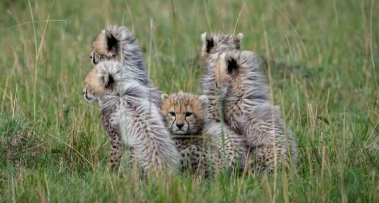 Video: Los bebés animales más lindos