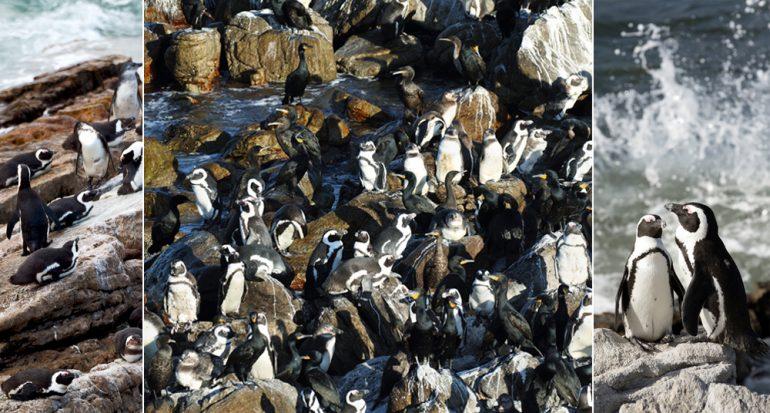 Visita a los pingüinos en África