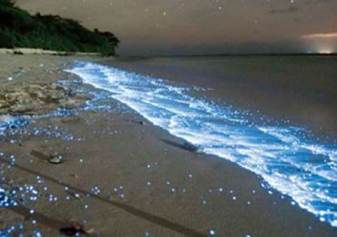 Visita aguas fosforescentes
