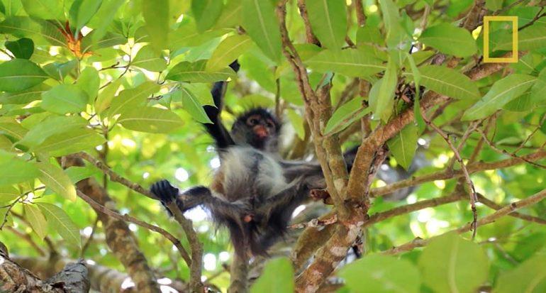 Visita el Jardín Botánico de Puerto Morelos