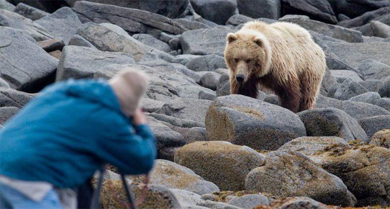 Cómo evitar ataques de osos