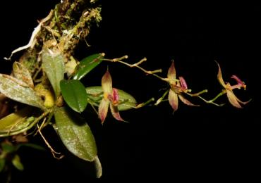 Foto Orquídea