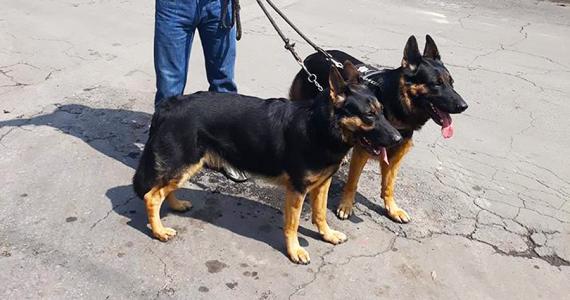 Sismo 2017 Perros