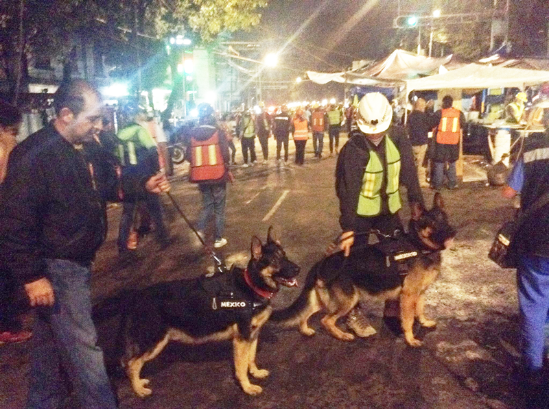 Perros Sismo 2017