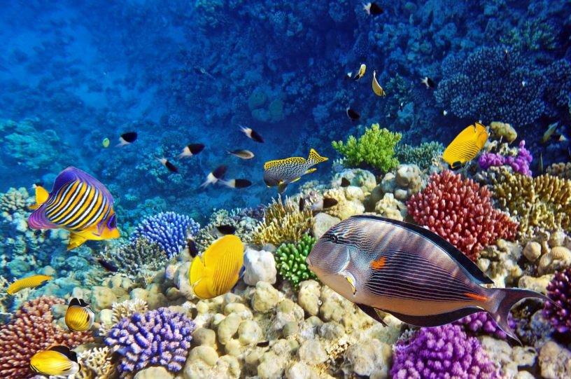 https://www.ngenespanol.com/animales/islas-galapagos-fuente-inagotable-nuevas-especies/