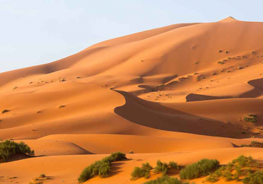 desierto semillas
