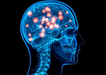 cerebro neuronas